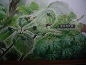 宜蘭員山福山植物園:IMGP5523.JPG