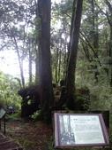 嘉義阿里山塔山步道、大塔山:IMGP0765-66.JPG