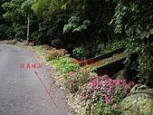 新竹芎林鹿寮坑桐花步道:IMGP3566.JPG