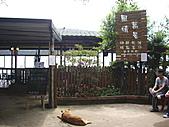 新竹芎林石碧潭山、飛鳳山、中坑山、牛欄窩山:IMGP6589.JPG