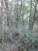 新竹尖石八五山古道、內鳥嘴山、北得拉曼步道:DSCN4991.JPG