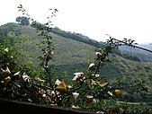 台中后里鳳凰山步道、觀音山步道:IMGP3859.JPG
