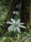 宜蘭員山福山植物園:IMGP5524.JPG