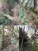 新竹尖石八五山古道、內鳥嘴山、北得拉曼步道:DSCN5008-12.JPG