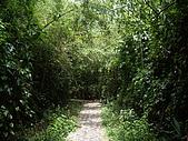 台中后里鳳凰山步道、觀音山步道:IMGP3833.JPG