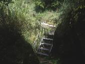 嘉義阿里山塔山步道、大塔山:IMGP0770.JPG