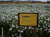 台中新社花海、暗影山:IMGP2560.JPG