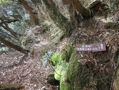 新竹尖石八五山古道、內鳥嘴山、北得拉曼步道:DSCN5007.JPG