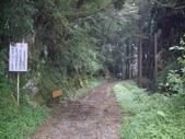 嘉義阿里山特富野古道、鹿林神木:IMGP3382.JPG