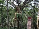 宜蘭三星拳頭姆自然步道:IMGP1875.JPG