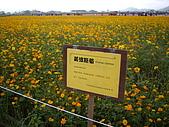 台中新社花海、暗影山:IMGP2562.JPG