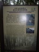 嘉義阿里山特富野古道、鹿林神木:IMGP3388.JPG