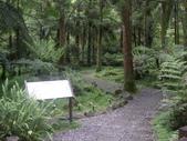 宜蘭員山福山植物園:IMGP5527.JPG