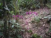 新北平溪頂子寮山、五分山:IMGP6509.JPG
