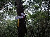 新竹關西流民窩山:IMGP3527.JPG