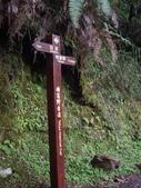 嘉義阿里山特富野古道、鹿林神木:IMGP3389.JPG