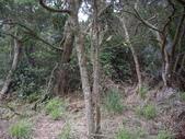 新竹新埔石頭山:IMGP3141.JPG