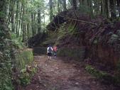 嘉義阿里山特富野古道、鹿林神木:IMGP3401.JPG