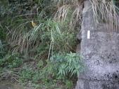 桃園蘆竹大古山、外社山:IMGP7193.JPG