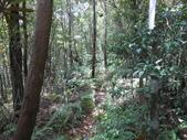 宜蘭大同旗山、婆羅山:DSCN4785.JPG