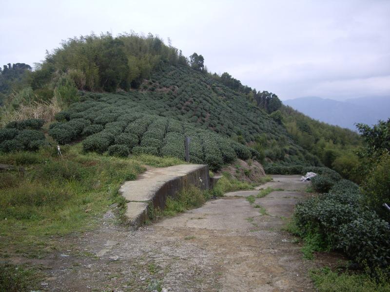 嘉義梅山二尖山、大尖山:IMGP8664.JPG