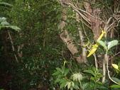 台東蘭嶼環島遊:IMGP5118.JPG