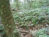 新竹尖石八五山古道、內鳥嘴山、北得拉曼步道:DSCN4979.JPG