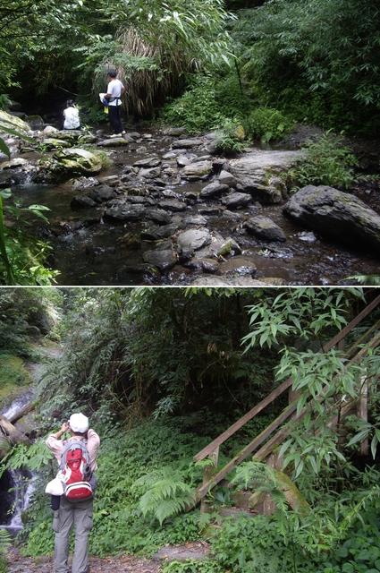 新竹尖石鎮西堡B區神木群:IMGP2409-10.JPG