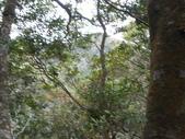 新竹尖石八五山古道、內鳥嘴山、北得拉曼步道:DSCN4990.JPG