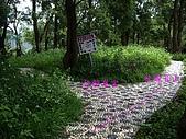 台中后里鳳凰山步道、觀音山步道:IMGP3837.JPG