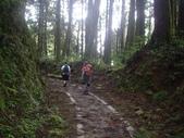 嘉義阿里山特富野古道、鹿林神木:IMGP3402.JPG