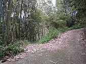 苗栗獅潭新莊山、紙湖古道、三字坑山、三尖山、三尖山東北峰:IMGP6283.JPG