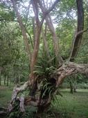 宜蘭員山福山植物園:IMGP5535.JPG