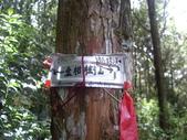 南投竹山忘憂森林、金柑樹山、嶺頭山:IMGP9522.JPG