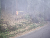 南投鹿谷樟空崙山、貓冬望山、大崙頭山、銀杏森林(羊彎上、下大石公):IMGP8907.JPG
