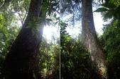 南投竹山忘憂森林、金柑樹山、嶺頭山:IMGP9523-24.JPG