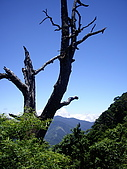 桃園復興夫婦山:IMGP1913.JPG