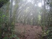 南投竹山忘憂森林、金柑樹山、嶺頭山:IMGP9525.JPG