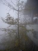 南投鹿谷樟空崙山、貓冬望山、大崙頭山、銀杏森林(羊彎上、下大石公):IMGP8922.JPG