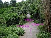 台中后里鳳凰山步道、觀音山步道:IMGP3841.JPG