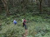 新竹尖石八五山古道、內鳥嘴山、北得拉曼步道:DSCN4967.JPG