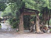 苗栗頭份老崎休憩步道、老崎坪頂山:IMGP4932.JPG