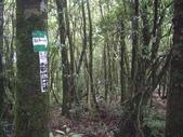 新竹尖石東穗山:IMGP6914.JPG