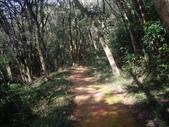 新北林口新林步道:IMGP7495.JPG
