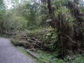 宜蘭員山福山植物園:IMGP5545.JPG