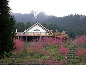 新竹五峰鵝公髻山:IMGP0725.JPG