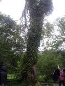 宜蘭員山福山植物園:IMGP5546.JPG