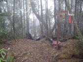南投竹山忘憂森林、金柑樹山、嶺頭山:IMGP9529.JPG