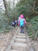 新竹尖石八五山古道、內鳥嘴山、北得拉曼步道:DSCN5037.JPG