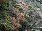 新竹尖石霞喀羅古道(養老段):IMGP1107.JPG